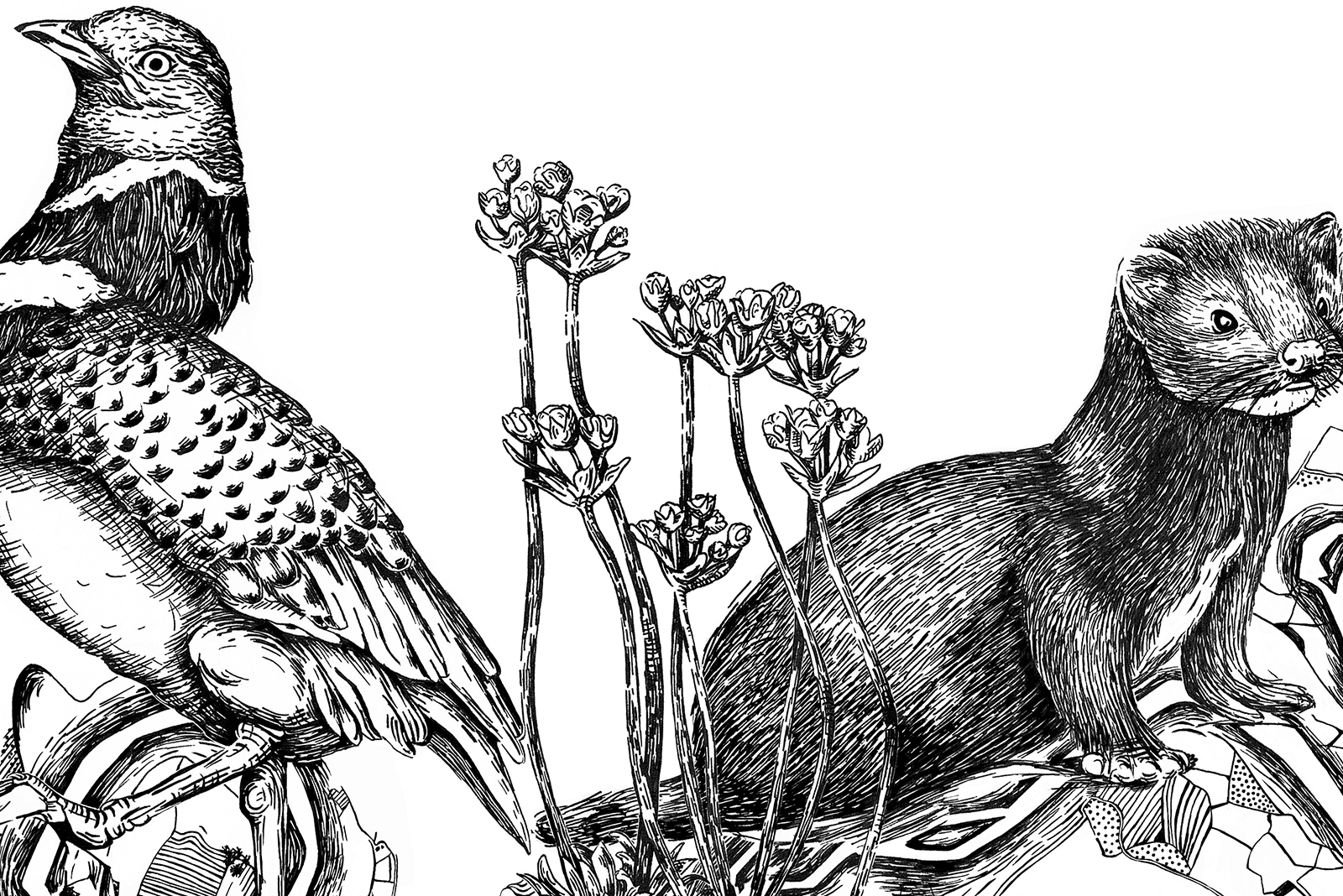 Ilustración etiqueta de vino Taller. Reivindicación de la flora y fauna en extinción de La Rioja.