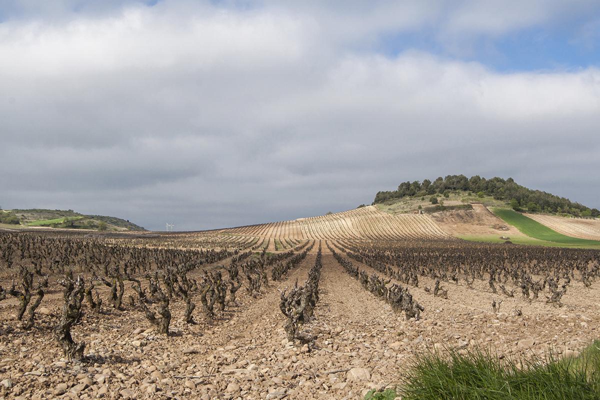 paisaje de viñedo